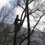 Санитарное удаление и спил деревьев