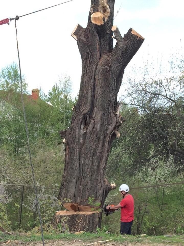 Удаление и спил дерева в Раменском районе