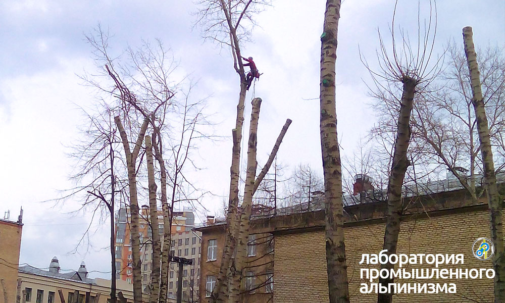 Обрезка, удаление и спил деревьев