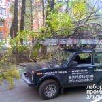 Санитарная обрезка, удаление и спил деревьев