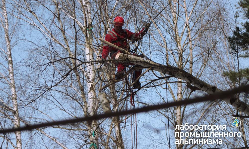 Удаление и спил аварийных деревьев в Голицыно