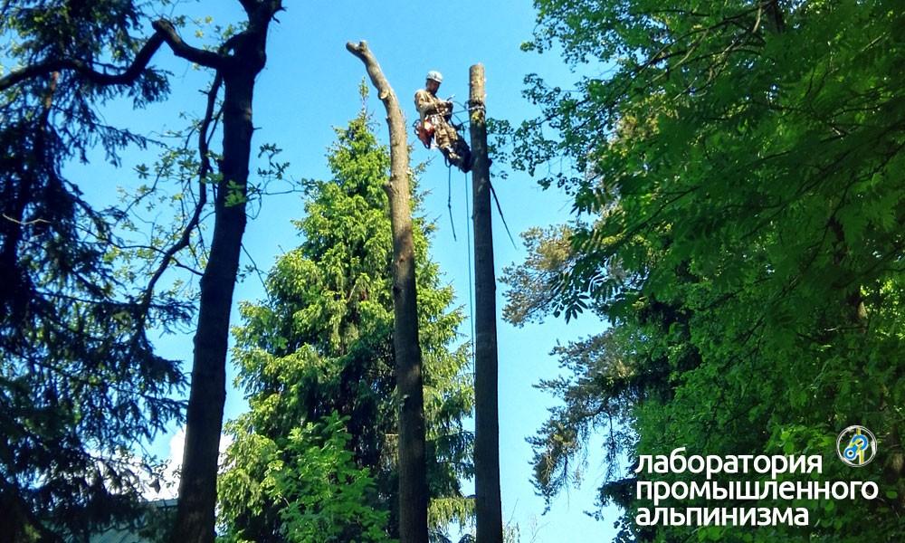 Удаление и спил деревьев в Подольском районе