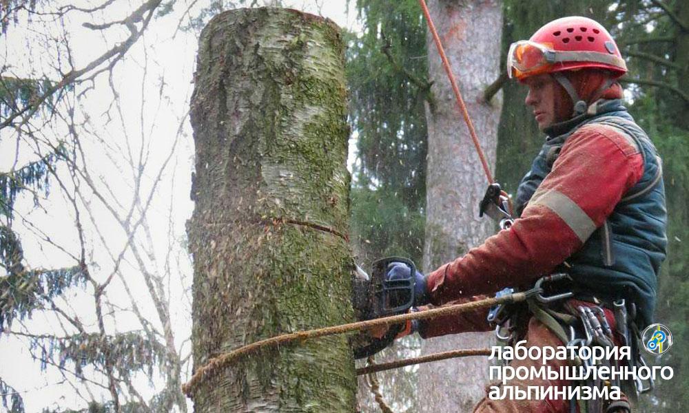 Удаление и спил опасно наклонённых деревьев