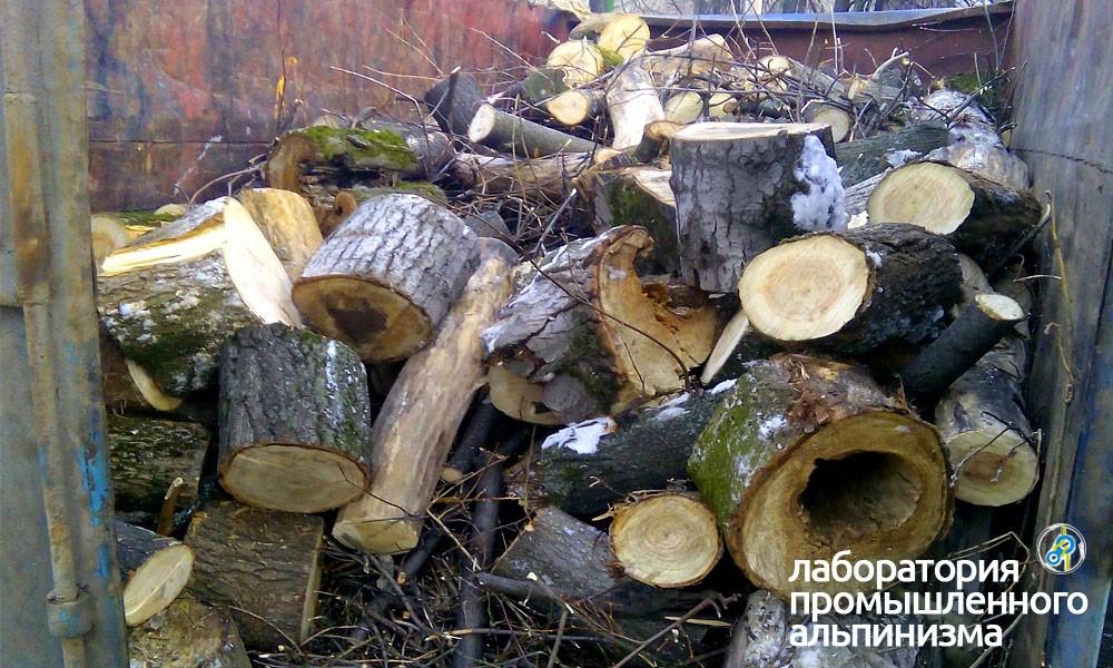 Удаление и спил сухих деревьев